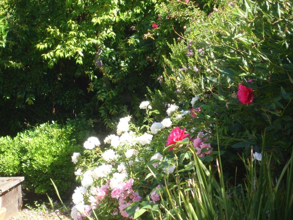 California mediterranean fusion garden la peluso designs for Free rose garden designs