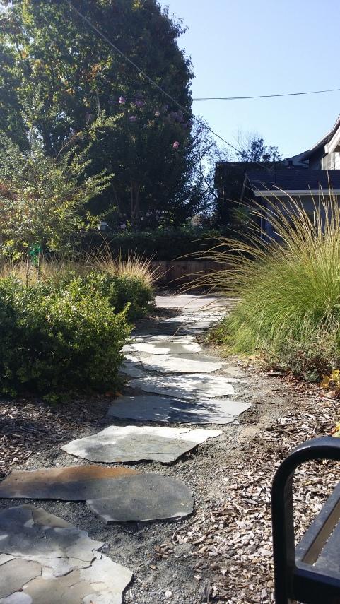 California Native Plant Garden, Menlo Park CA