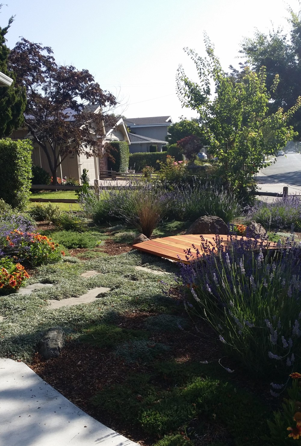 Landscape Rebate Garden San Jose CA Lavender Dymondia Apricots Low Water Landscape