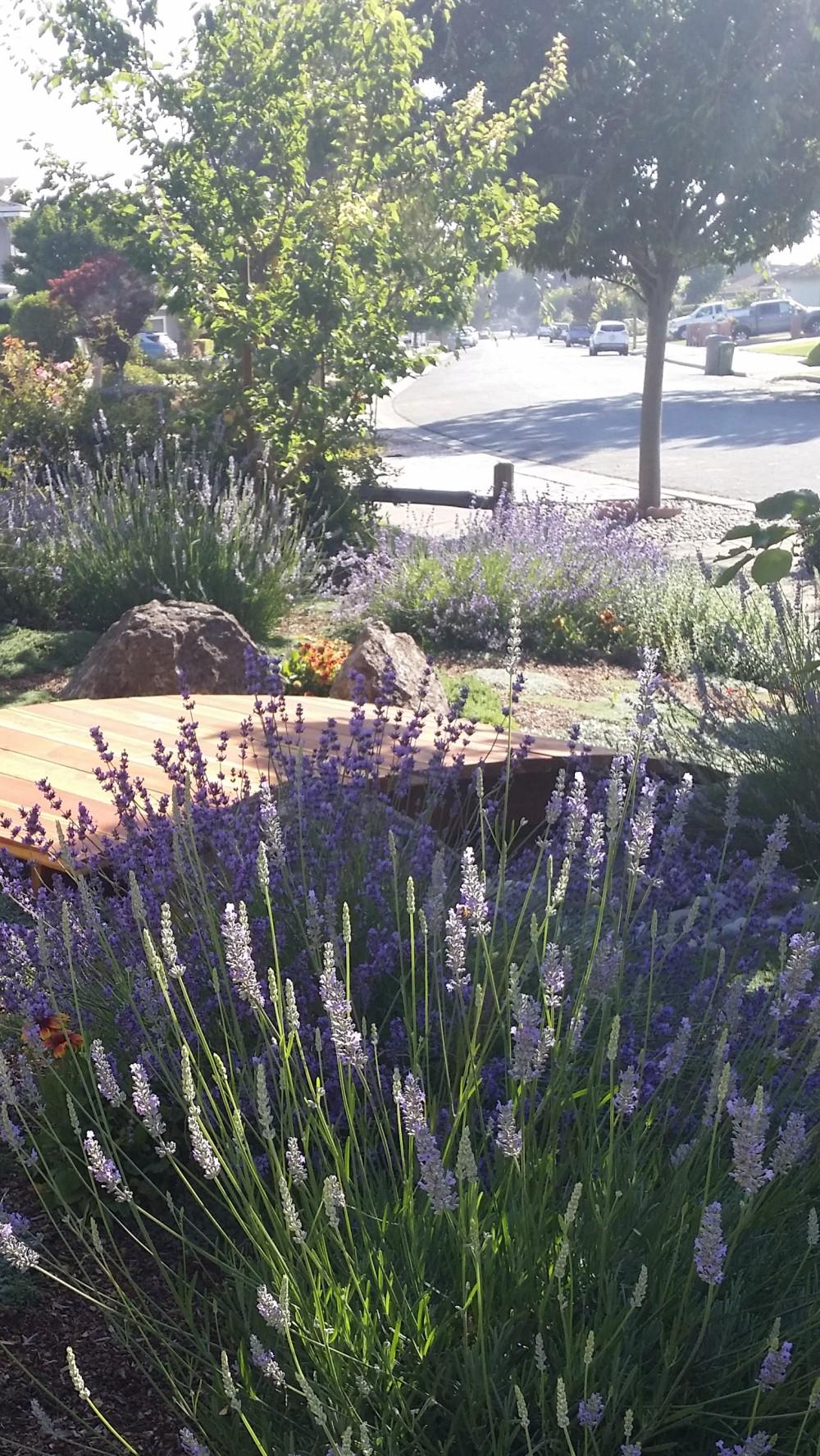 Landscape Rebate Garden San Jose CA Lavender